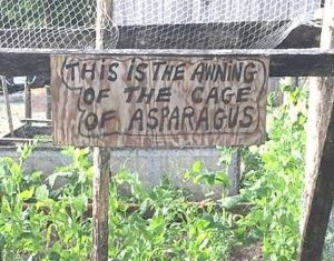 The Awning of the Cage of Asparagus